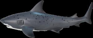 Mojo Sealife